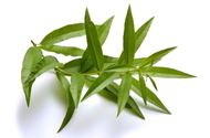 Picture of Lemon verbena leaf