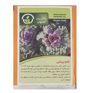 Picture of Pakan Bazr Ornamental Cabbage Seeds