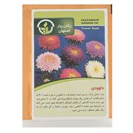 Picture of Pakan Bazr Chrysanthemums Flower Seeds