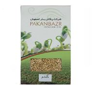 Picture of weat seed